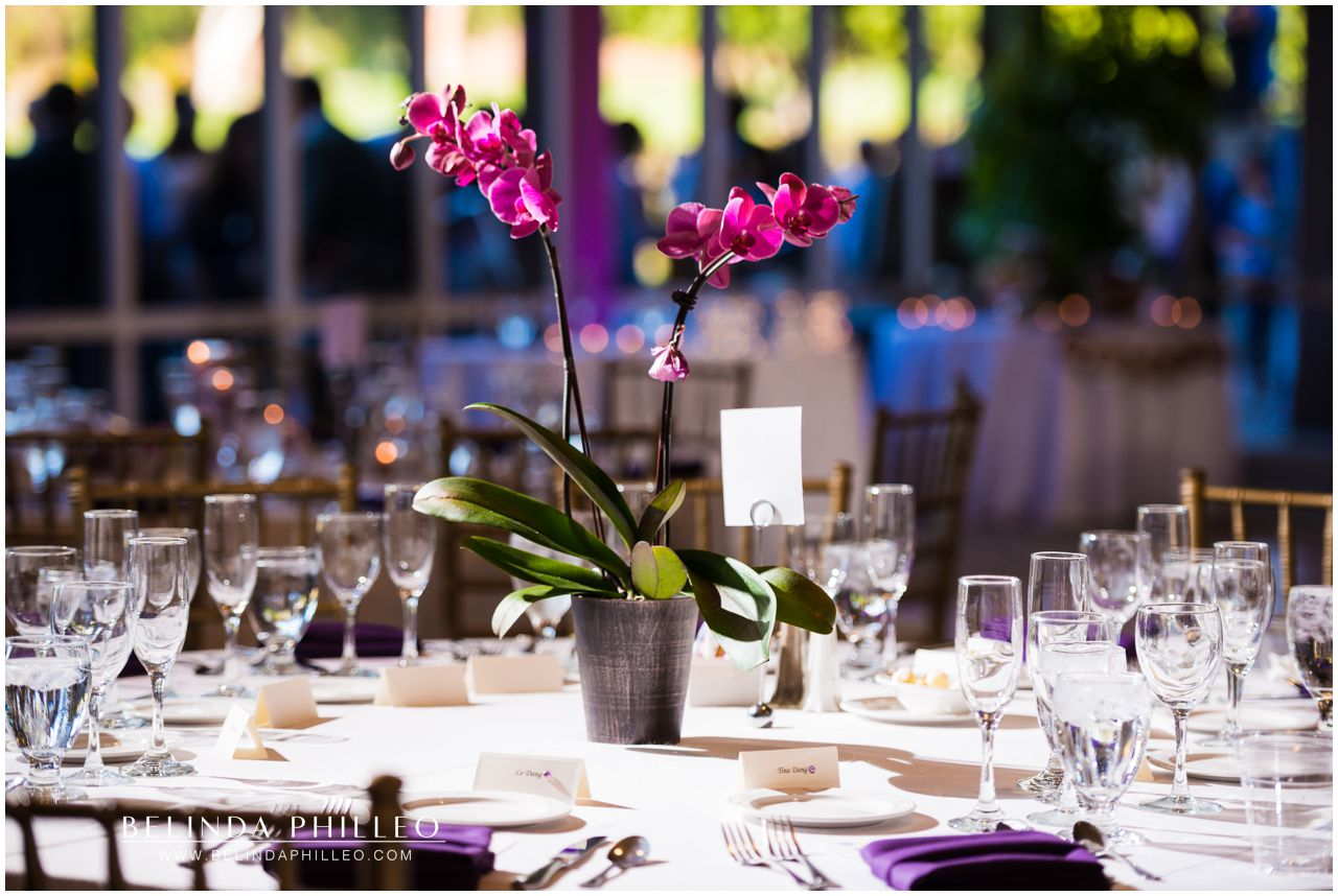 Purple Orchid Centerpieces Friendly HIlls Country Club Wedding Reception